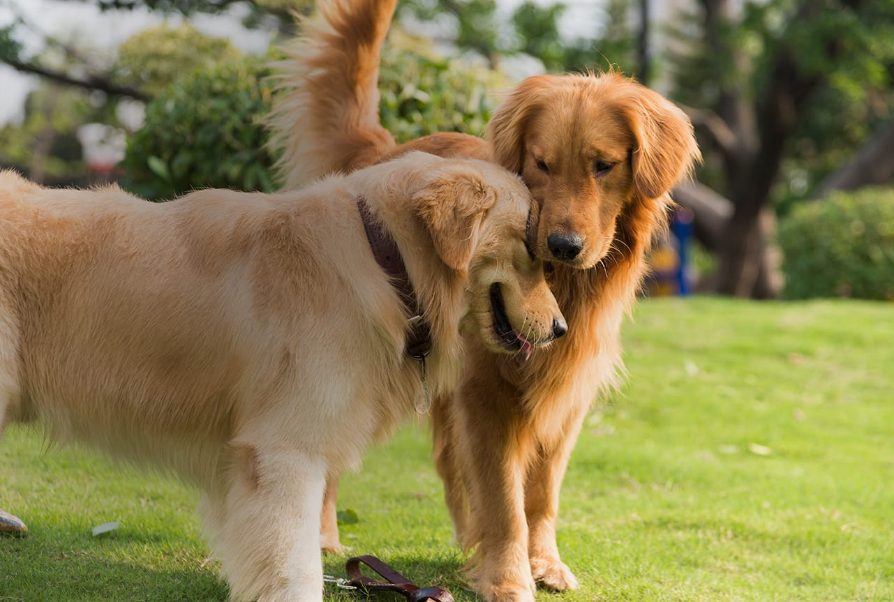 Resources And Information For Dogs With Diabetes Vetsulin